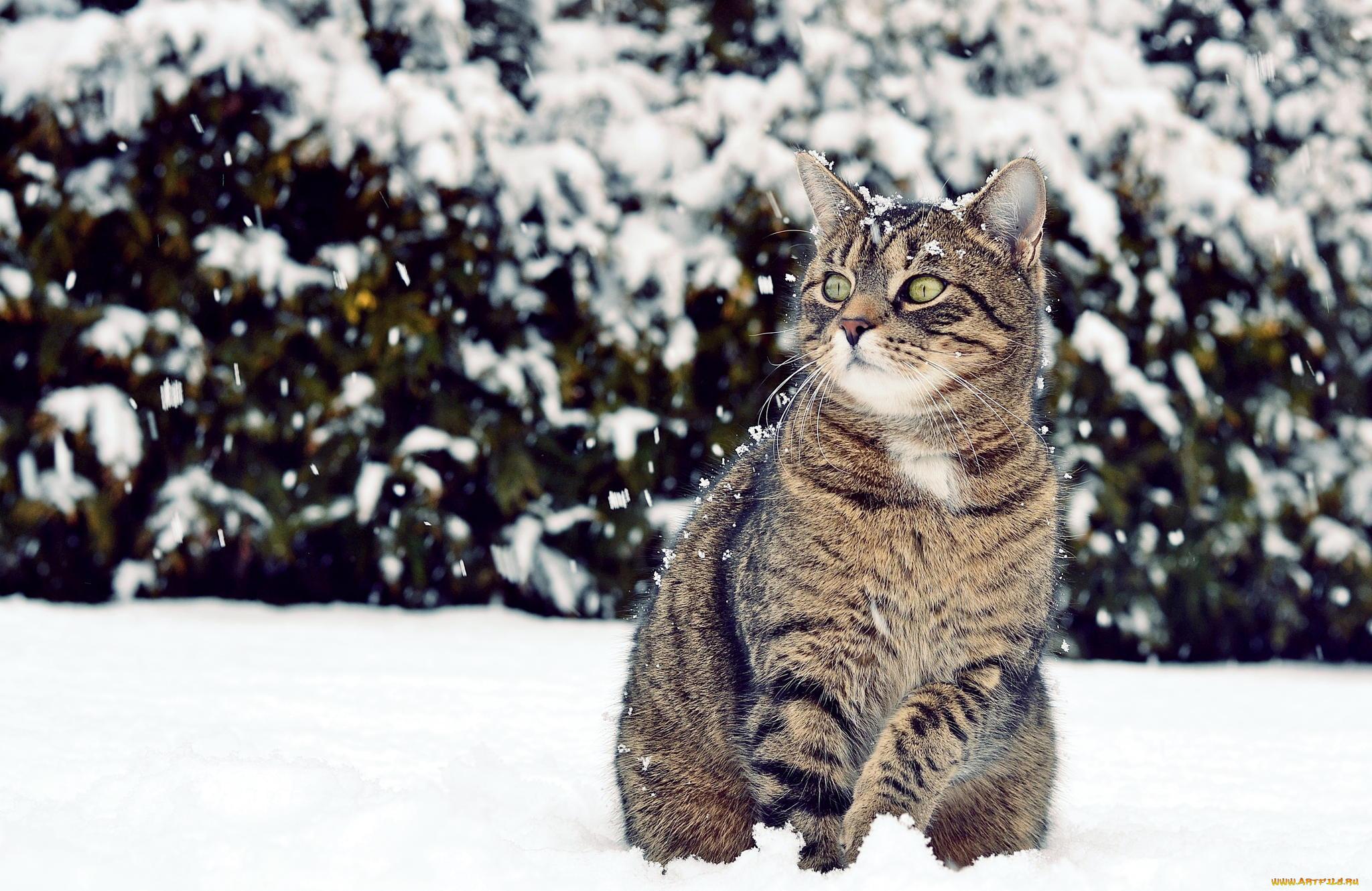 снегопад и животные картинки холодно, успокаиваюсь